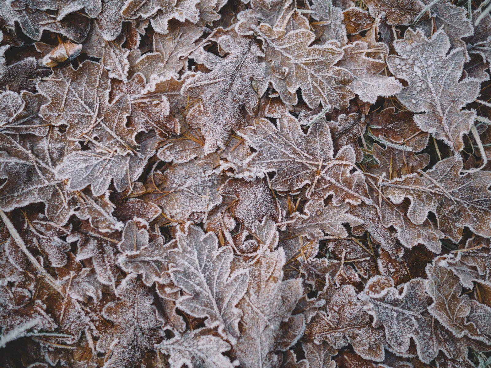 closeup photo of green leaves