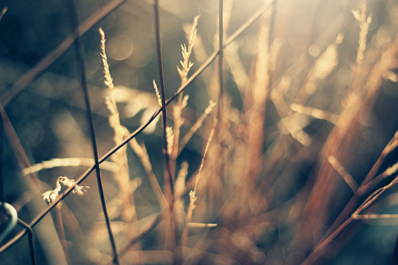 selective-focus photography of brown chain link surrounded by grasses